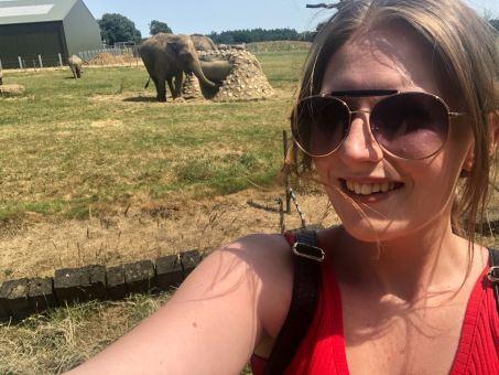 elephant x3