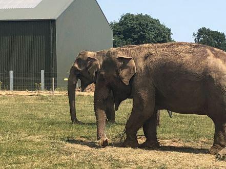 elephant x4