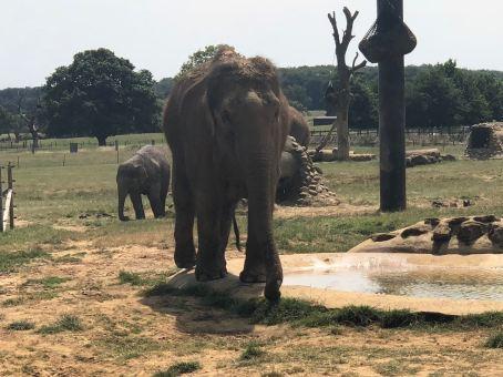 elephant x5