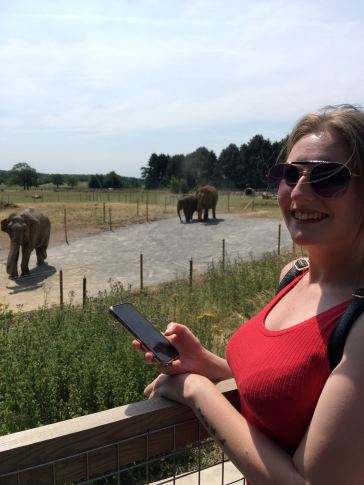 elephant x8